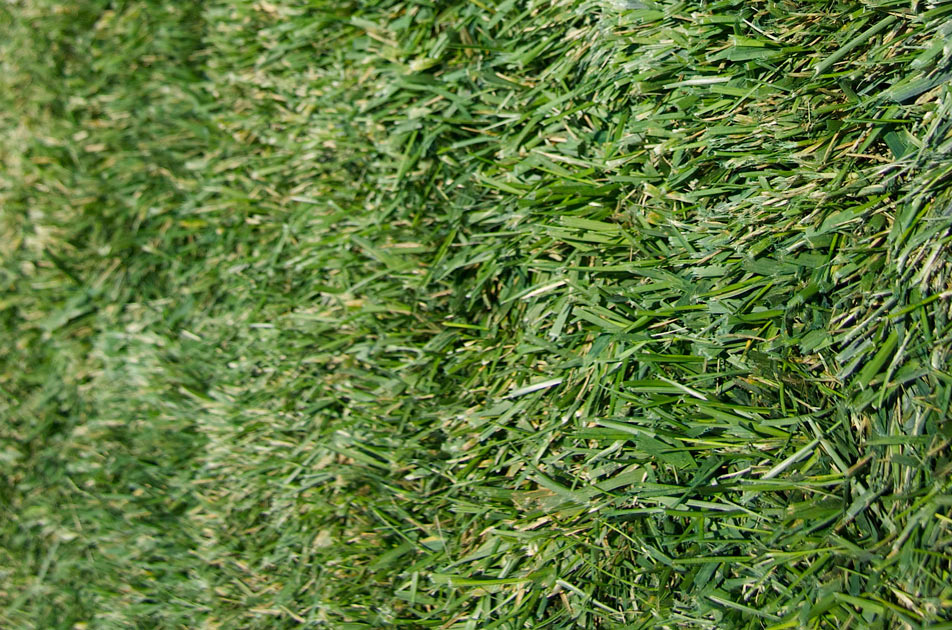 green_grass_pick_4