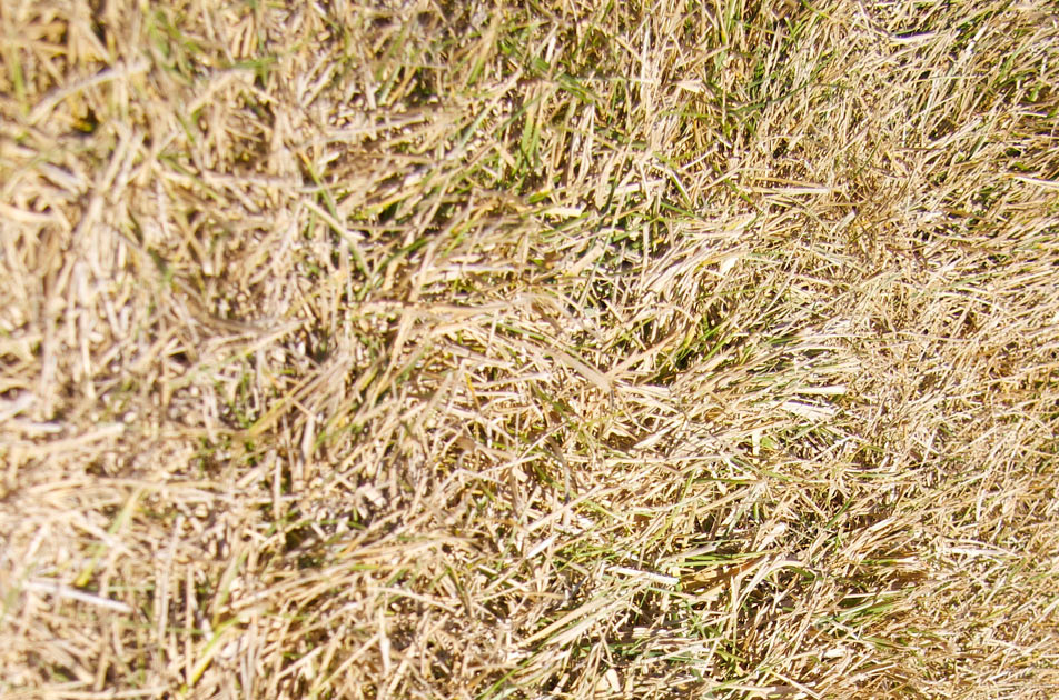 green_grass_pick_3