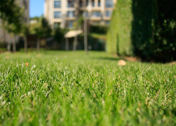 4_green_grass_private property