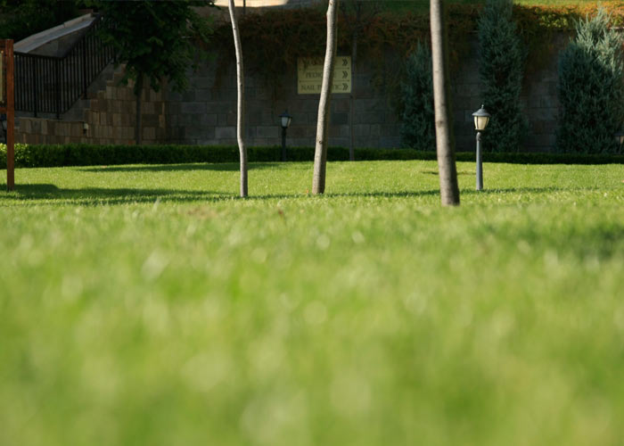 5_green_grass_private property