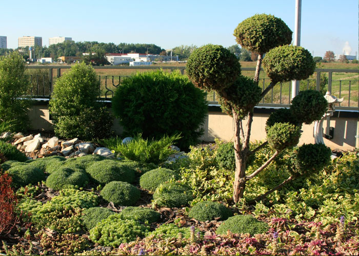 5_green_grass_mall_starnd_burgas