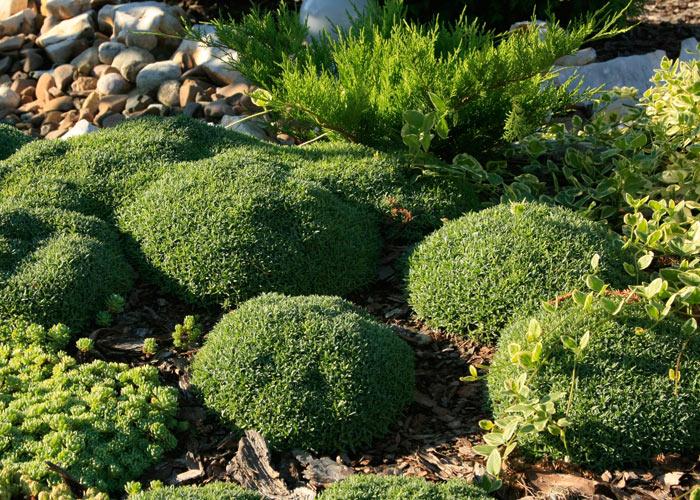6_green_grass_mall_starnd_burgas