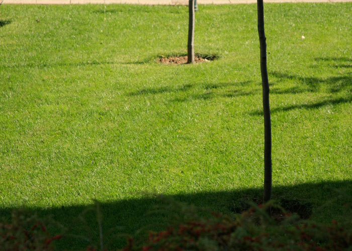8_green_grass_private property