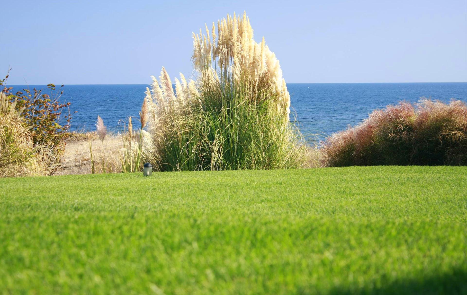 green_grass_main_background_2